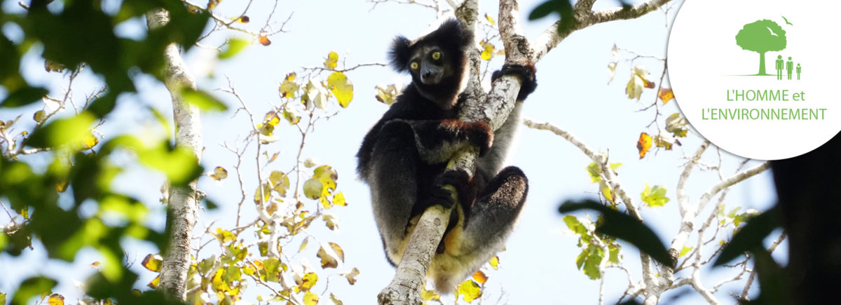 The Explorers supports L'Homme et l'Environnement in the protection of lemurs in Vohimana, Madagascar