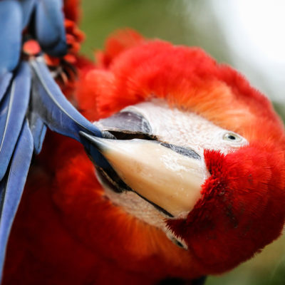 The Explorers Organisation Macaw Project