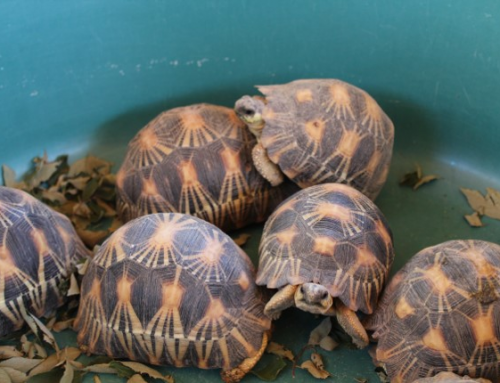New seizures taken to the Tortoise Village