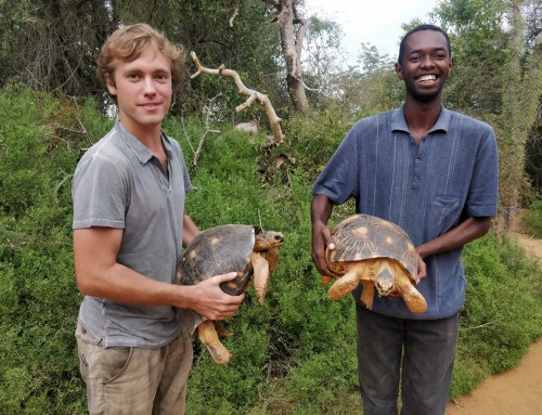 Field phase completed for radiated tortoises census